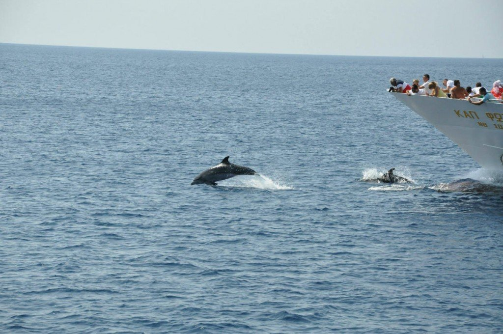 Dolphins follow us everyday!!!!