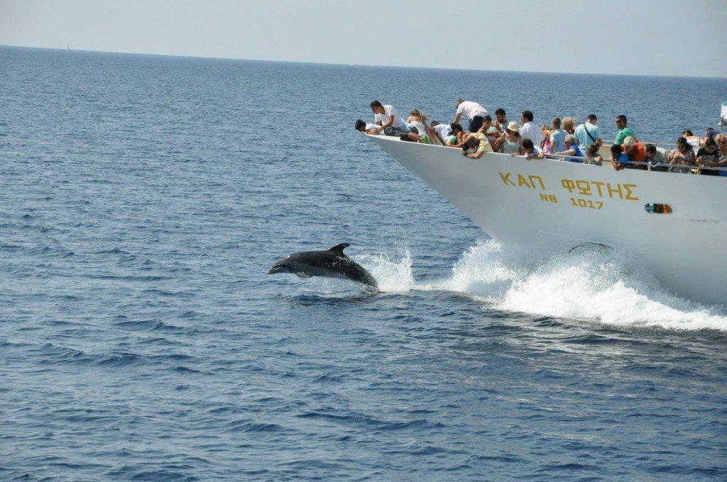 Dolphins in Aegean, Halkidiki, Greece