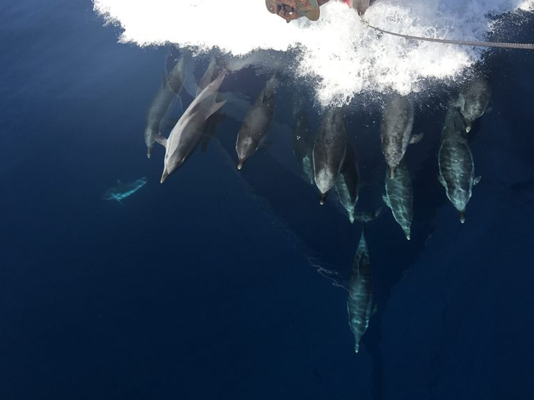 Video – side by side with the dolphins!!