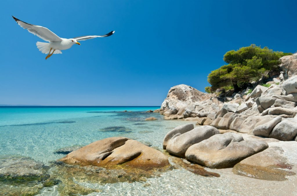 Explore Halkidiki with all your senses..!!!